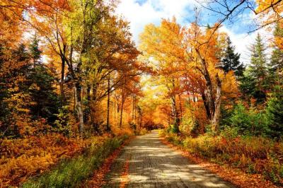Best Places to Enjoy Fall Foliage in and Around Nashville